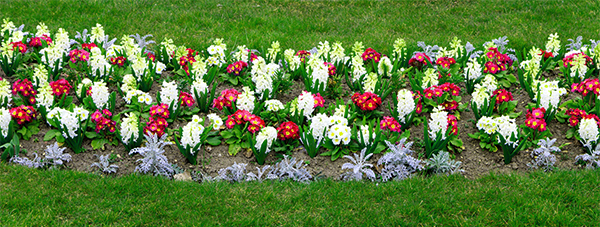 Blooming flower bed with red and white flowers